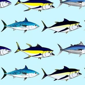 7 Tuna large on light blue