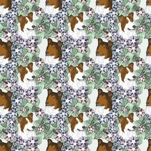 Floral Sable Smooth Collie portraits
