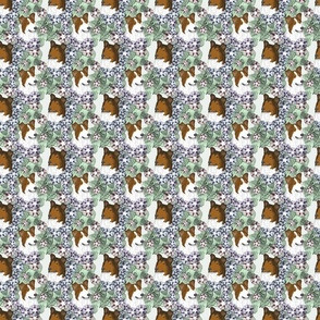 Small Floral Sable Smooth Collie portraits