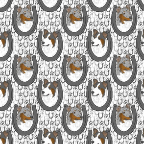 Tri and Merle Smooth Collie horseshoe portraits