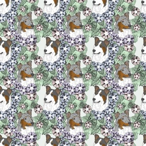 Floral Tri and Merle Smooth Collie portraits