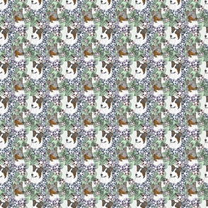 Small Floral Tri and Merle Smooth Collie portraits