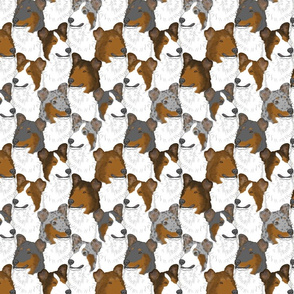 Smooth Collie portrait pack
