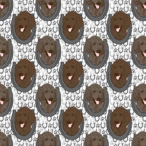 Chocolate Cafe au lait Standard Poodle horseshoe portraits