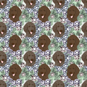 Floral Chocolate Cafe au lait Standard Poodle portraits