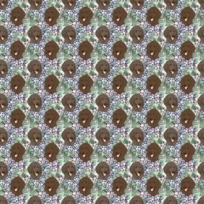 Small Floral Chocolate Cafe au lait Standard Poodle portraits