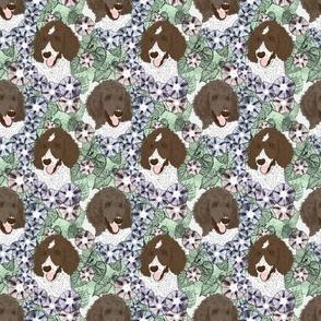 Floral Parti Chocolate Cafe au lait Standard Poodle portraits