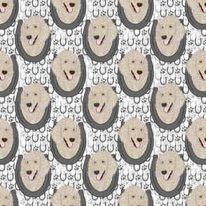 Cream Standard Poodle horseshoe portraits