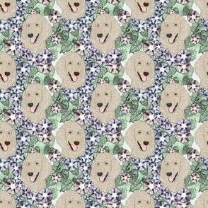 Floral Cream Standard Poodle portraits