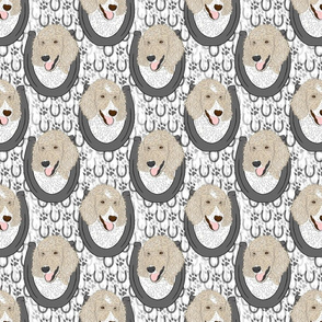 Parti Cream Standard Poodle horseshoe portraits