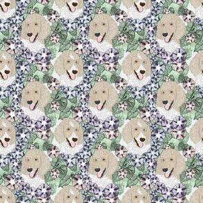Floral Parti Cream Standard Poodle portraits