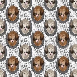 Sable Standard Poodle horseshoe portraits