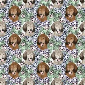 Floral Sable Standard Poodle portraits