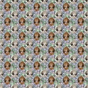 Small Floral Sable Standard Poodle portraits