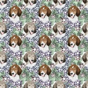Floral Parti Sable Standard Poodle portraits