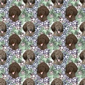 Floral Brindle Standard Poodle portraits