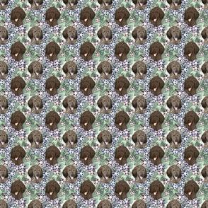 Small Floral Brindle Standard Poodle portraits