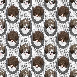 Parti Brindle Standard Poodle horseshoe portraits