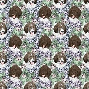 Floral Parti Brindle Standard Poodle portraits