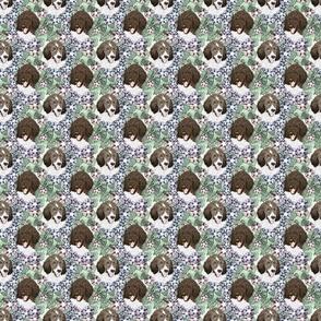 Small Floral Parti Brindle Standard Poodle portraits