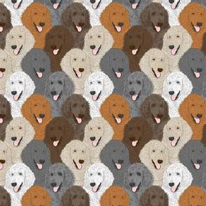 Standard Poodle portrait pack