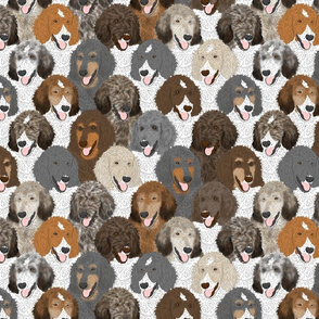 Multi-color Standard Poodle portrait pack