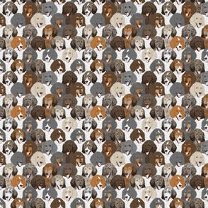 Small Multi-color Standard Poodle portrait pack