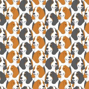 Basset hound portrait pack