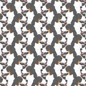 Greater Swiss Mountain Dog portrait pack