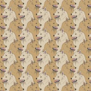 Cream Fawn Schipperke portrait pack