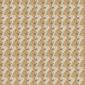 Small Cream Fawn Schipperke portrait pack