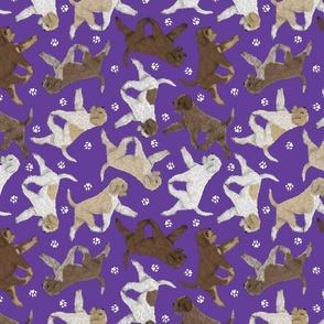 Trotting Lagotto Romagnolo and paw prints - purple