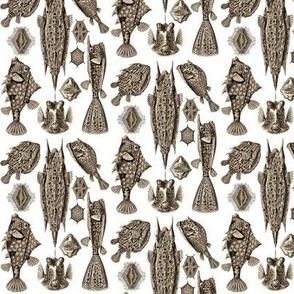 Ernst Haeckel Ostraciontes Bony Fish Wenge Ditsy