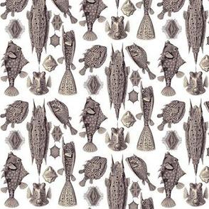 Ernst Haeckel Ostraciontes Bony Fish Aubergine Ditsy