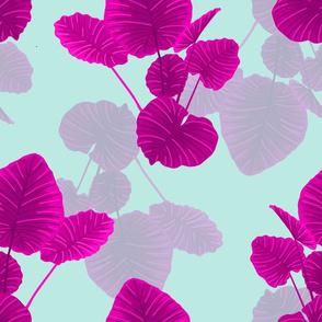 Elephant Ears Pink on Aqua Background