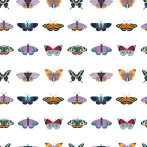 Tropical rainforest butterflies