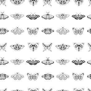 Black on white butterflies