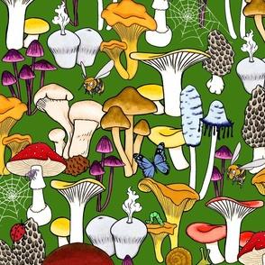 My Favorite Fungi