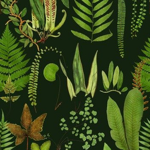 Ferns Deep Green Forest // standard