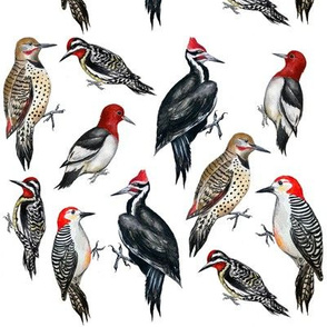 North American Woodpeckers