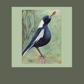 """Australian magpie 8""""x8""""-framed"""