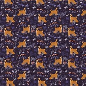 Afganhounds in the night
