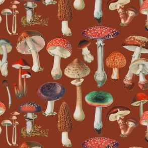 So Many Mushies Red Brown // standard