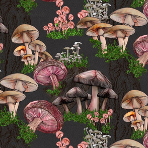 Fungi Forest
