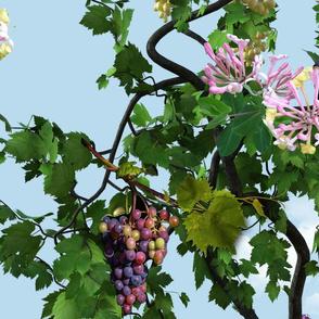 grapevine on a blue sky wallpaper
