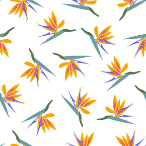 bird of paradise-scatter-tighter-largescale