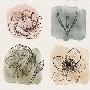 Bella Nora watercolour line art