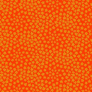 Baby daisy orange