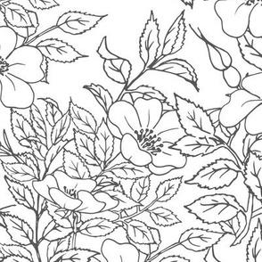 Branch flower dog rose with leaves, floral sketch