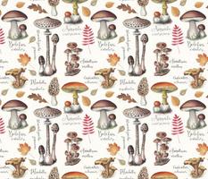 Botanical-mushrooms